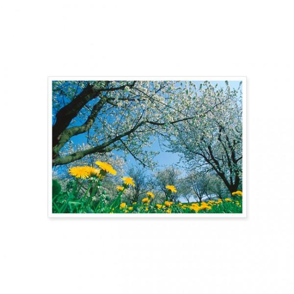 "Postkarte ""Frühlingswiese"""