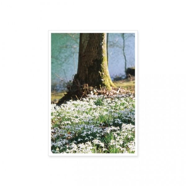 """Postkarte """"Waldboden voller Schneeglöckchen"""""""