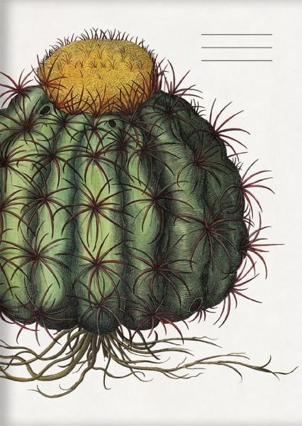 """kl. Kladden A6 """"Kaktus aus dem Garten von Eichstätt"""""""