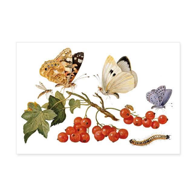 Postkarten large still leben mit roter johannisbeere for Mit 100 dingen leben