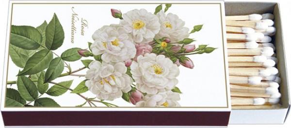 Zündholz-Schachteln 'Rosa noisettiana'