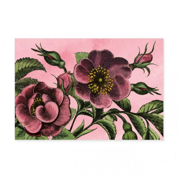 """Postkarten Large """"Die Rosen von Eichstätt"""""""