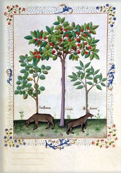 Kladden A6 'Haselnussbusch und Kirschbaum'