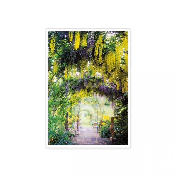 """Postkarte """"Blau- und Goldregen-Tunnel"""""""