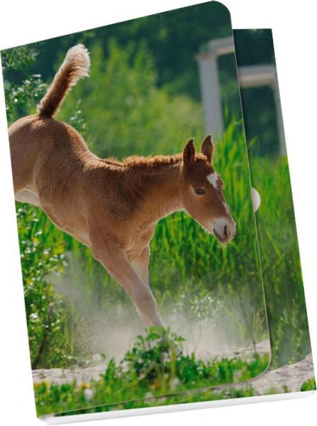 Taschennotizblöckchen 'Curly Horse'