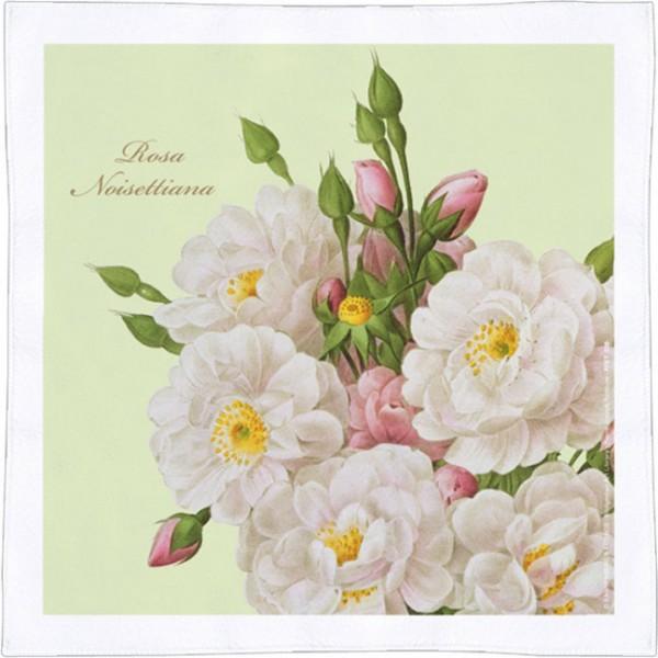 Spültuch 'Rosa noisiettana'