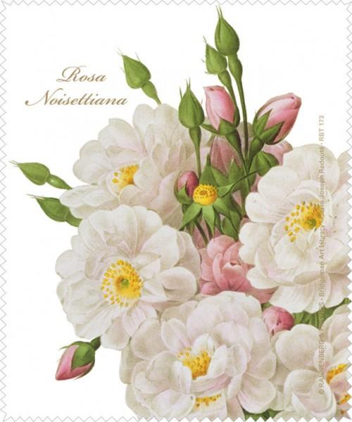 Brillenputztuch 'Rosa noisettiana'