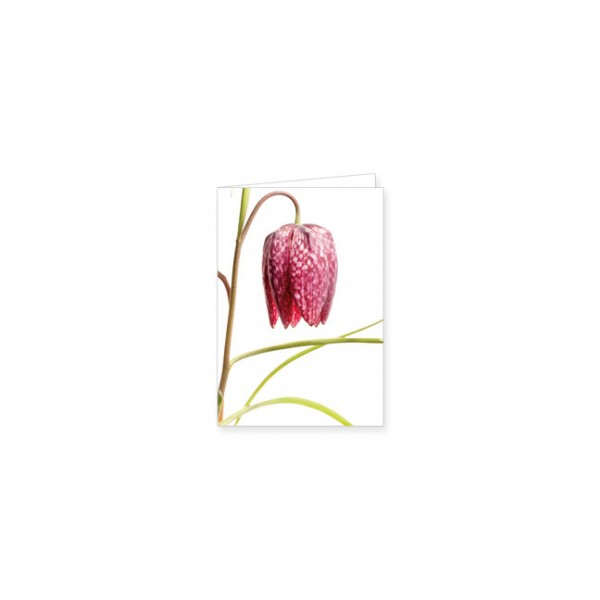 """Mini-Doppelkarte """"Rote Schachblume"""""""