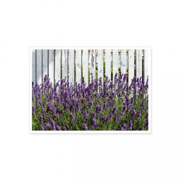 """Postkarte """"Lavendel am Zaun"""""""