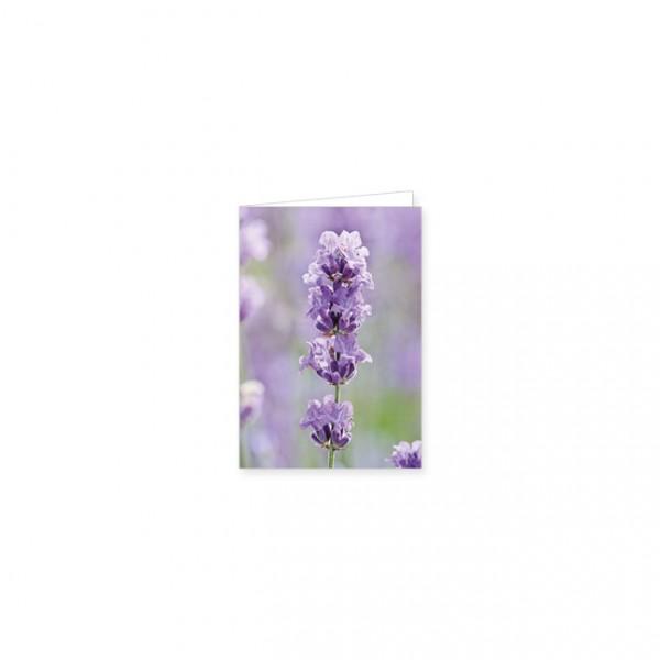 """Mini-Doppelkarte """"Lavendel"""""""