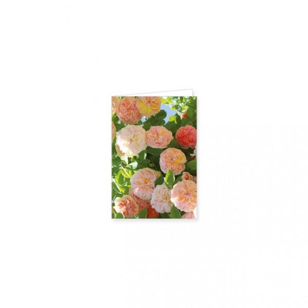 "Mini-Doppelkarte ""Rose Alchymist"""