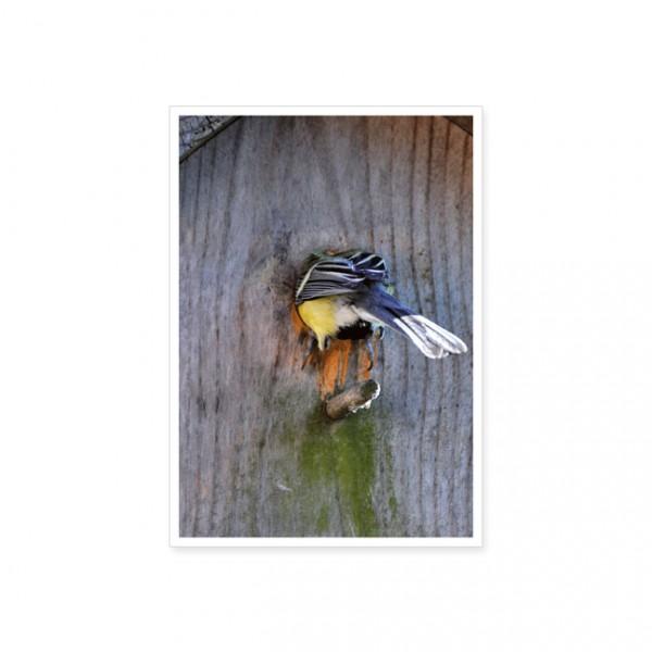"""Postkarte """"Vogelhaus-Einzug"""""""