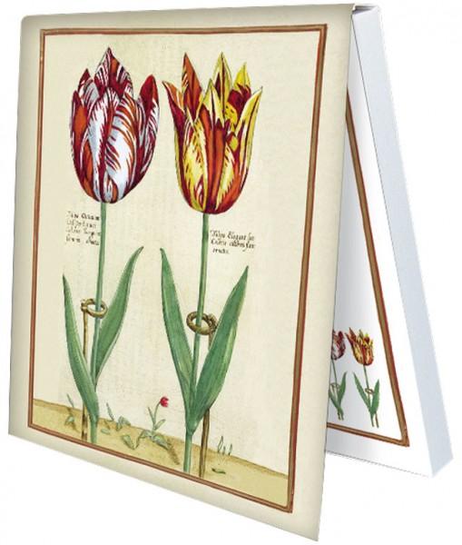 Klebezettel 'Tulipa Octaviani und Tulipa Elegant'