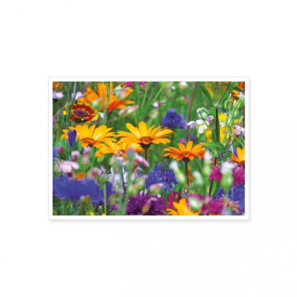 """Postkarte """"Bunte Blütenwiese"""""""