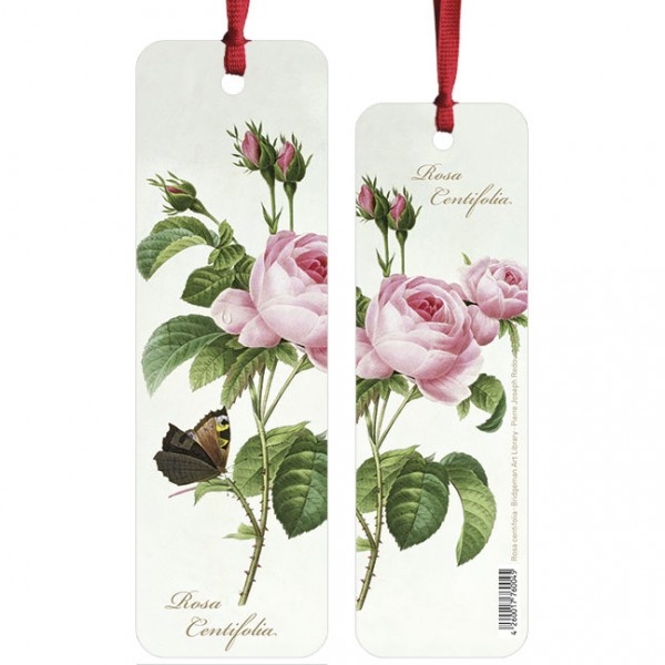 "Lesezeichen ""Rosa centifolia """