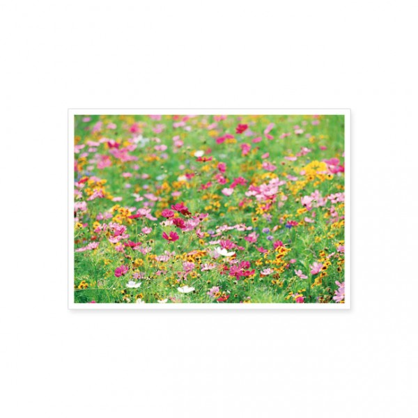 "Postkarte ""Wildblumen im Tal"""