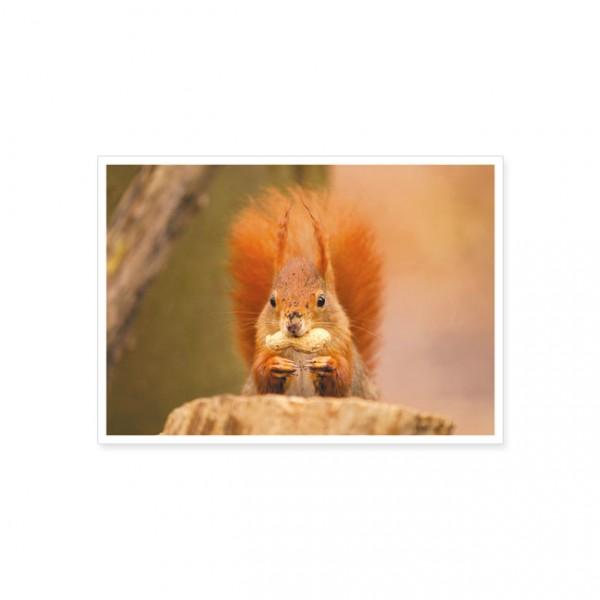 """Postkarte """"Eichhörnchen mit Nuss"""""""