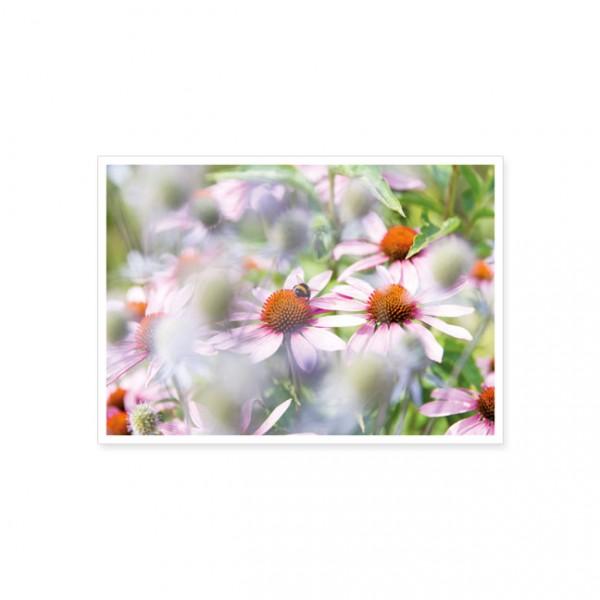 "Postkarte ""Echinacea mit Hummel"""