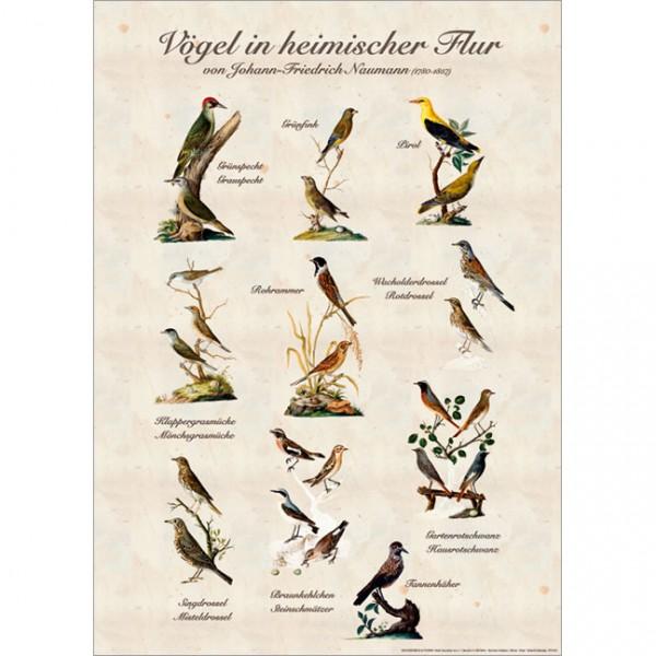 """Poster """"Gartenvögel"""""""
