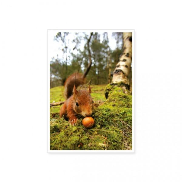 """Postkarte """"Eichhörnchen mit Haselnuss"""""""