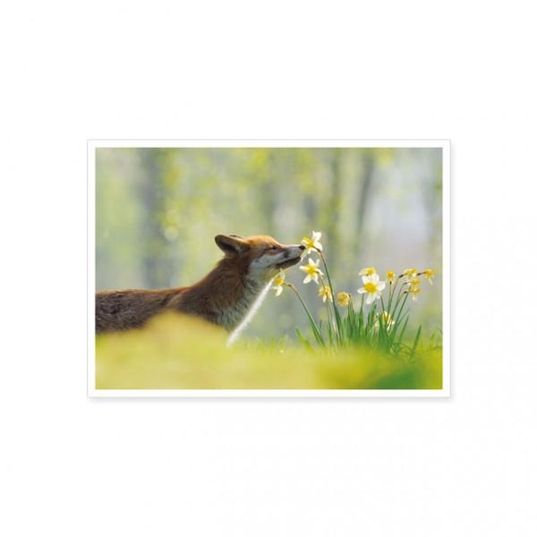 "Postkarte ""Frühjahrsduft schnuffeln"""
