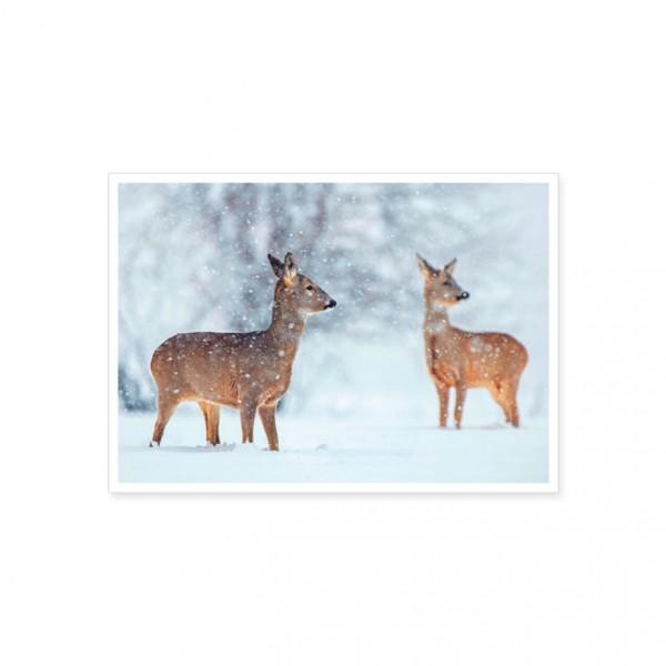 """Postkarte """" Rehe auf schneebedeckten Feld """""""