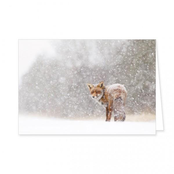 """Doppelkarten """"Rotfuchs im Schnee"""""""