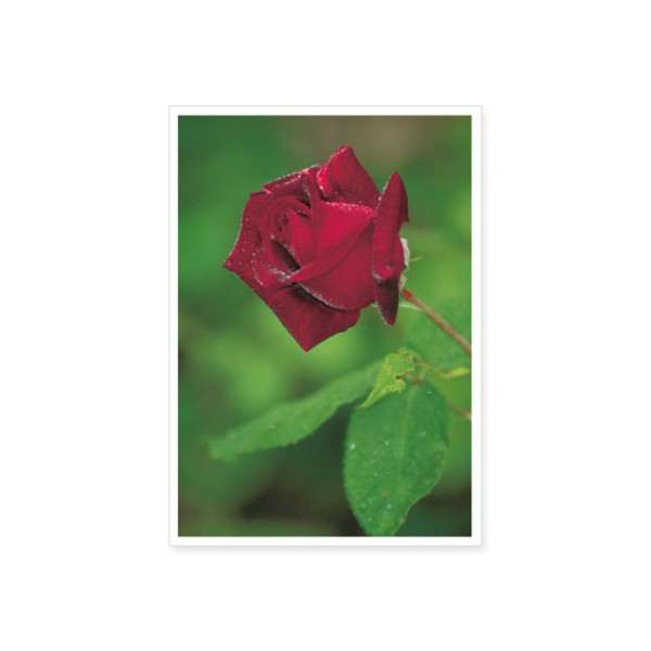 """Postkarte """"Rose"""""""