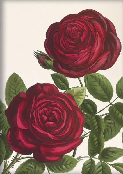 """gr. Kladden A5 """"Rote Rosen"""""""