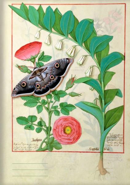 Kladden A5 'Rose und Vielblütige Weißwurz (Vielblütiges Salomonssiegel)'