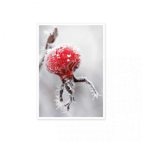 """Postkarte """"Hagebutte mit Frost"""""""