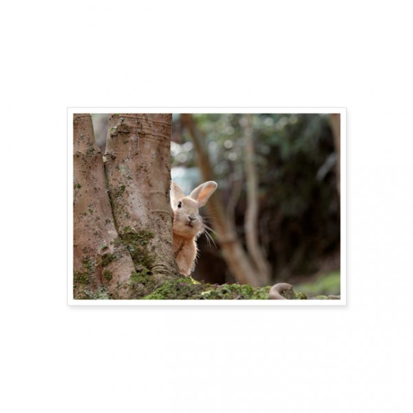 """Postkarte """"Wildkaninchen hinterm Baum"""""""