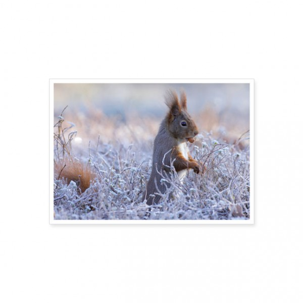 """Postkarte """"Eichhörnchen im Winter"""""""