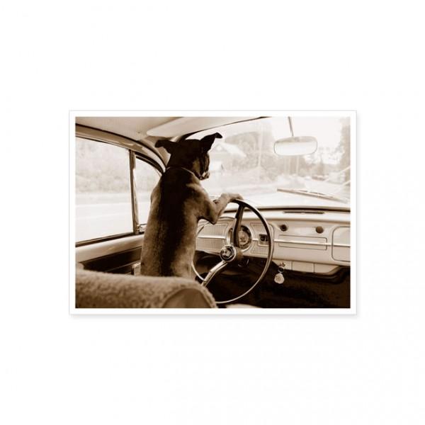 """Postkarte """"Hund am Steuer"""""""
