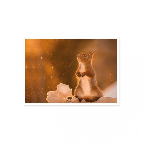 """Postkarte """"Eichhörnchen im Schnee"""""""