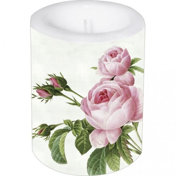 Lampionkerze groß 'Rosa centifolia'