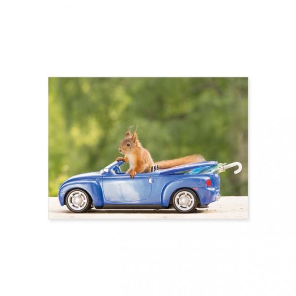 """Postkarte """"Eichhörnchen auf Spritztour"""""""