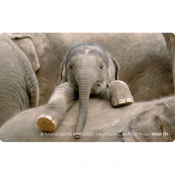 Magnete 'Baby Elefant'