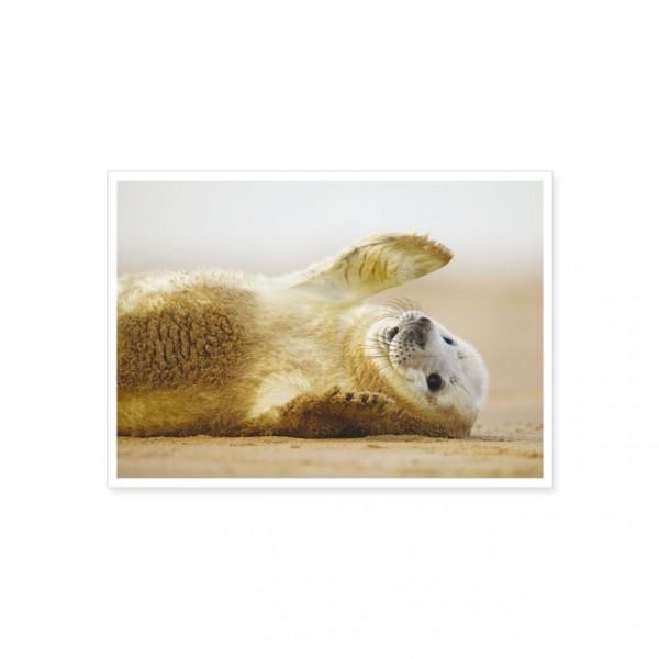 "Postkarte ""Kegelrobbenjunges (Halichoerus grypus)"""
