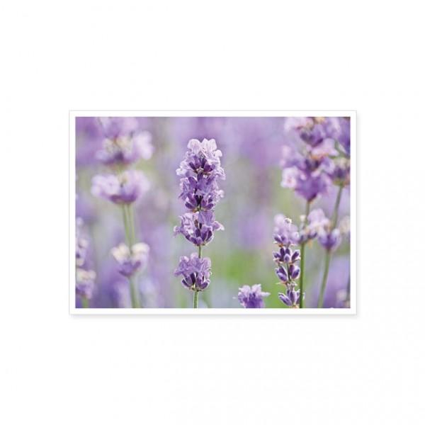 """Postkarte """"Lavendel"""""""