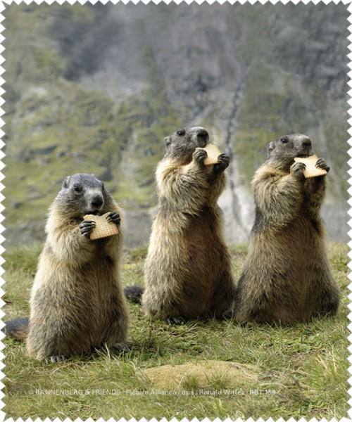 Brillenputztuch 'Murmeltiere beim Snack'
