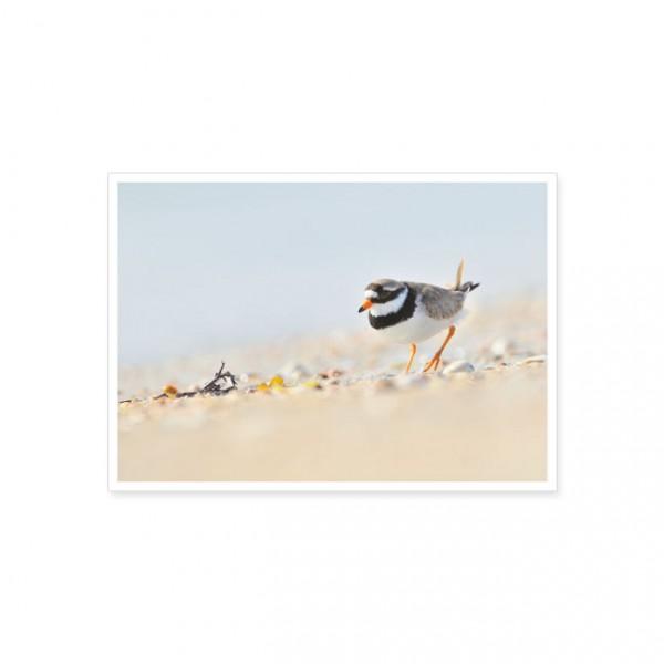 "Postkarte ""Sandregenpfeifer"""