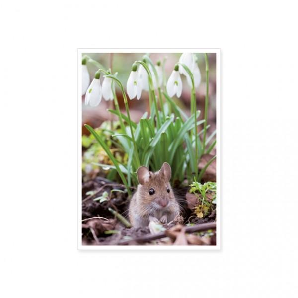 """Postkarte """"Waldmaus unter Schneeglöckchen"""""""