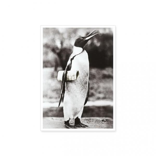 """Postkarte """"Pinguin mit Notenblatt"""""""