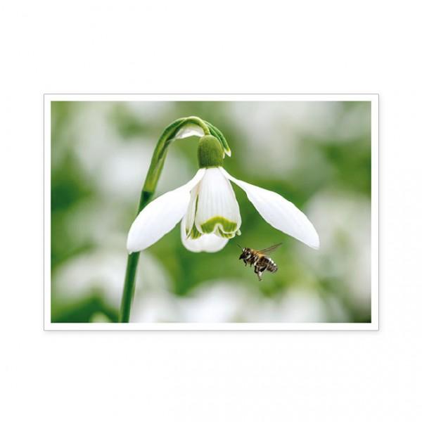"""Postkarte """" Die frühe Biene… """""""