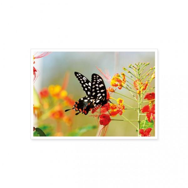 """Postkarte """"Schwalbenschwanz"""""""