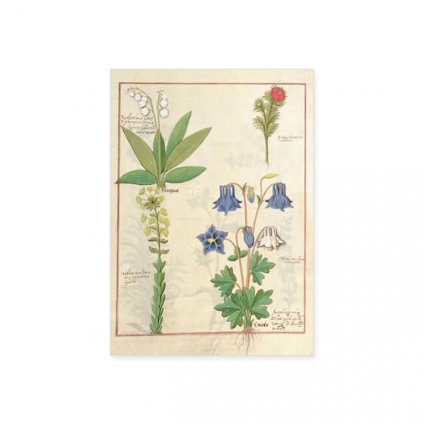 """Postkarte Gold """"Das Buch der Einfachen Heilmittel Folie 135r"""""""