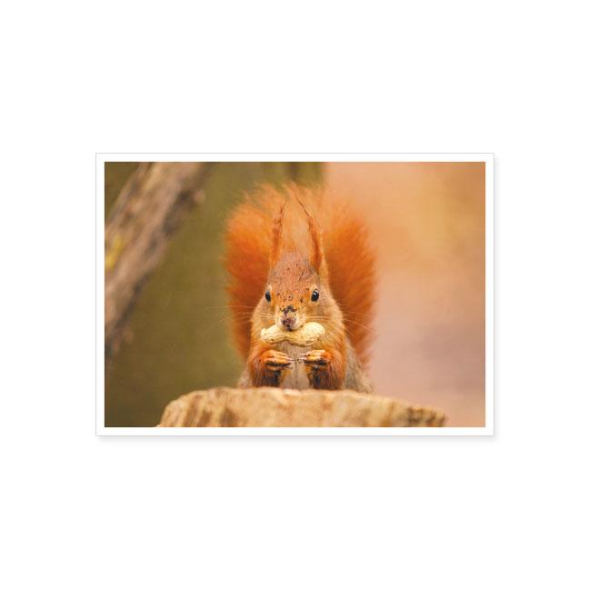 """postkarte """"eichhörnchen mit nuss""""   postkarte   tiere"""