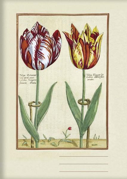 Kladden A6 'Tulipa Octaviani und Tulipa Elegant'