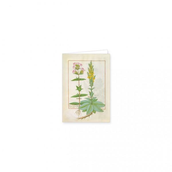 """Mini-Doppelkarten Gold """"Das Buch der Einfachen Heilmittel Folie 145v"""""""